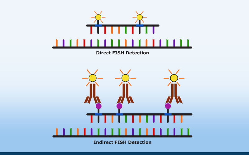 FISH: Applications in Cancer Diagnostics